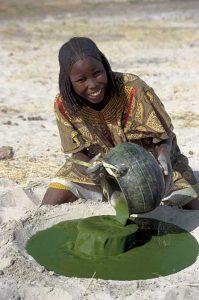 La Spiruline est cultivée artificiellement sur fumier depuis la nuit des temps au Tchad. L'AFA (AlphaOne SynerJ-Health) quant à elle est récoltée dans son état sauvage et naturel.