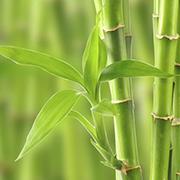 Le silicium organique, ici naturellement extrait du bambou, est un élément naturel formidable pour permettre entre autre une meilleure assimilation du phosphore et renforcer la santé articulaire, des os et des articulations. Un excellent composant du SynerThrose des laboratoires SynerJ-Health de Jacques Prunier pour lutter efficacement contre l'arthrose, l'arthrite et les douleurs articulaires et des os.